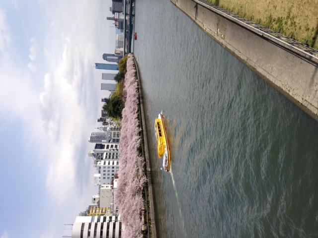 天満橋からの桜